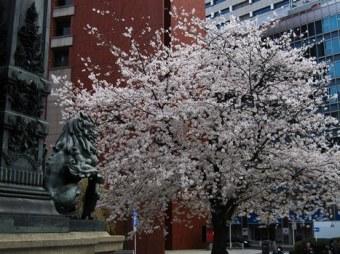 過去・桜・未来_1